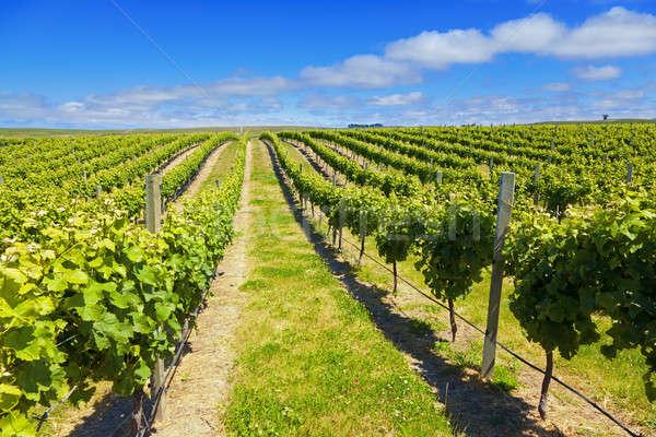 Nowa Zelandia wina kraju winnicy region południe Zdjęcia stock © alexeys