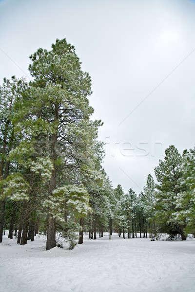 Winter scene Stock photo © alexeys