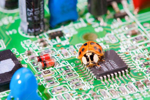 Computer bug Stock photo © alexeys