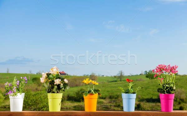 Potted flowers Stock photo © alexeys