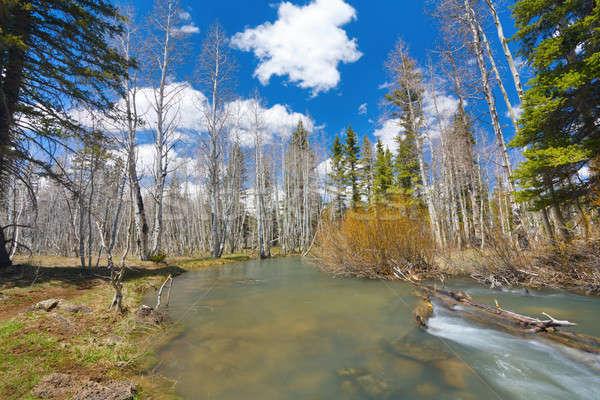 Spring water Stock photo © alexeys