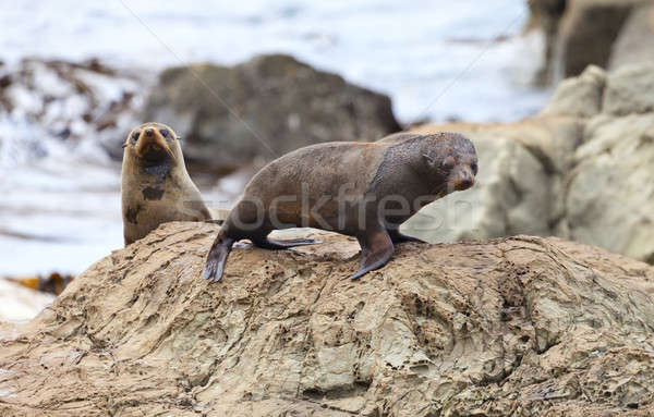 Sea Lion's life Stock photo © alexeys