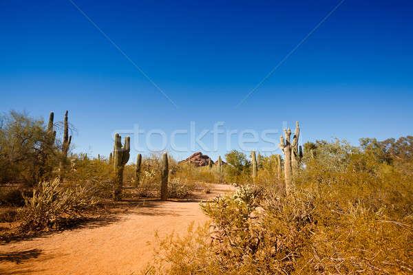 Arizona sivatag tipikus tájkép kék ég út Stock fotó © alexeys