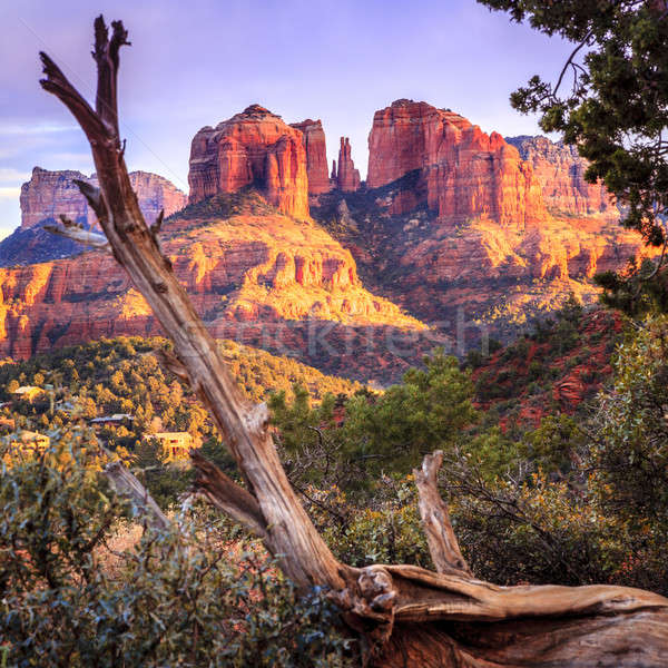 Sunset at Cathedral Rock Stock photo © alexeys