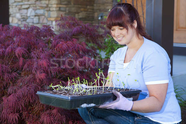 Foto stock: Temporada · bandeja · plántulas · vegetales