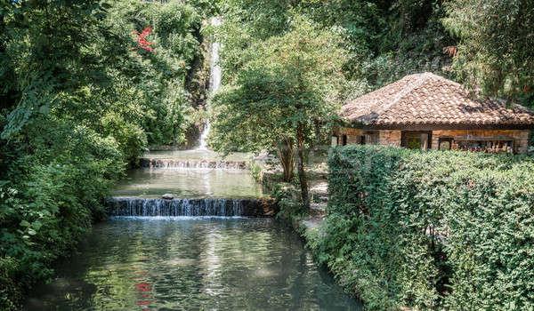 Waterfall in a garden Stock photo © alexeys