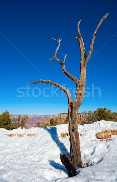 Toter Baum Arizona groß Wüste Winter Holz Stock foto © alexeys