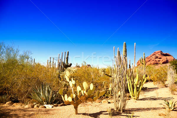アリゾナ州 砂漠 典型的な 風景 青空 自然 ストックフォト © alexeys