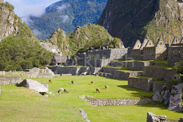 Machu Picchu oude ruines stad veld reizen Stockfoto © alexeys