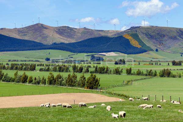 Nouvelle-Zélande agriculture moutons parc éolien nuages printemps Photo stock © alexeys