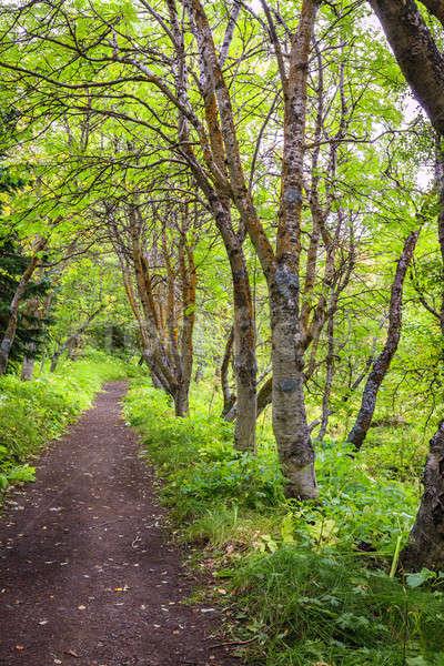 Chodzić lesie szlak charakter parku jezioro Zdjęcia stock © alexeys