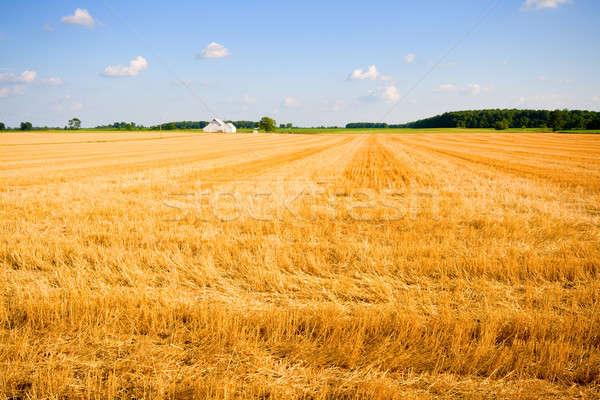 Farmland Stock photo © alexeys