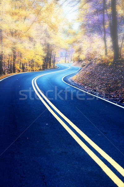 Stock photo: Winding road in morning fog
