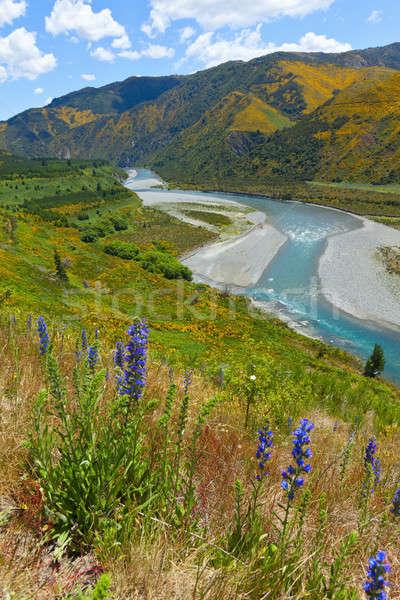Verano paisaje escénico vista río Foto stock © alexeys