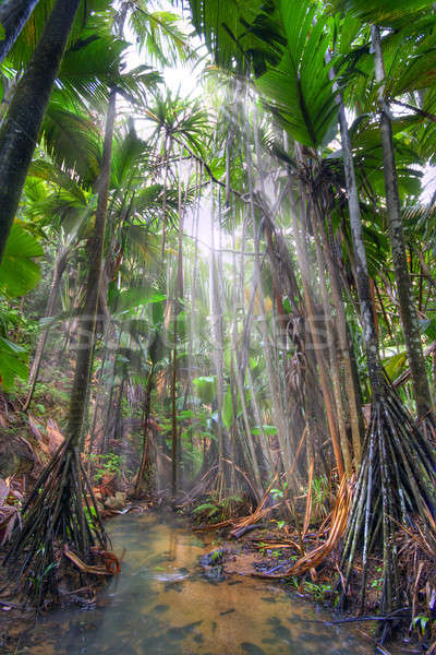Giungla parco isola Seychelles hdr Foto d'archivio © alexeys