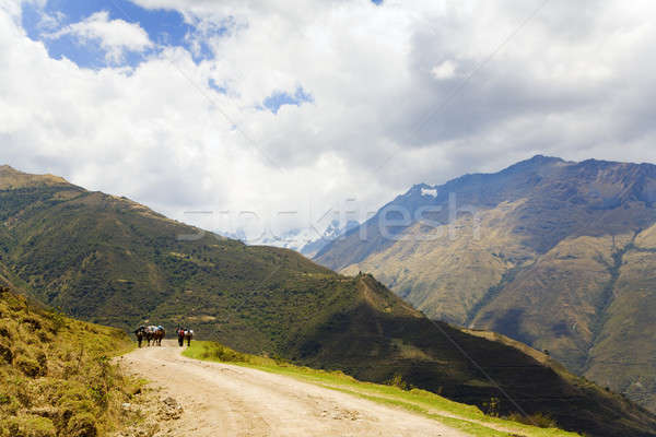 Stock photo: On the road in Andes