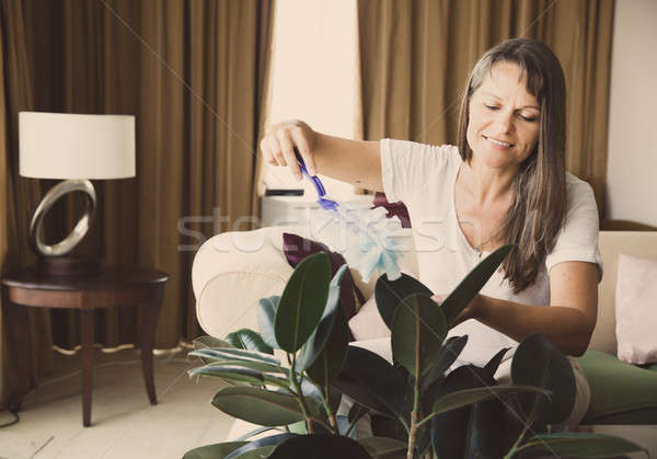 Woman is cleaning houseplant Stock photo © alexeys