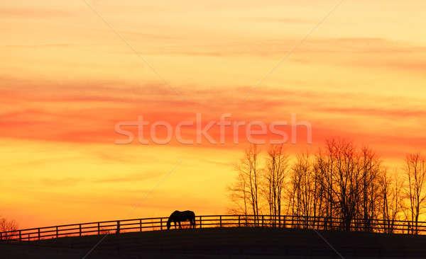 At çiftlik gün batımı dramatik gökyüzü Stok fotoğraf © alexeys