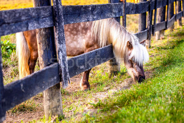 ポニー 外 フェンス 草 自然 馬 ストックフォト © alexeys