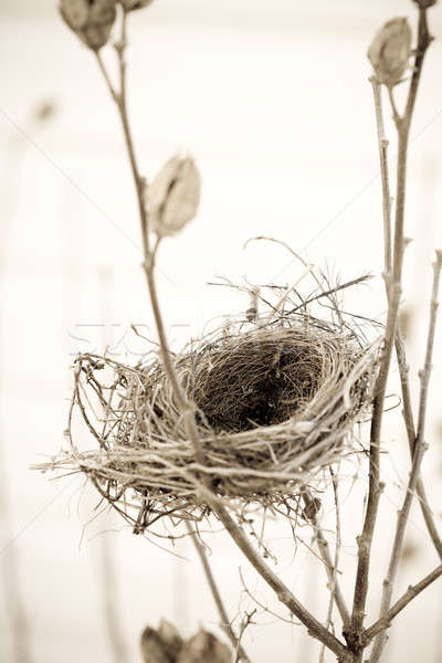 Empty nest Stock photo © alexeys