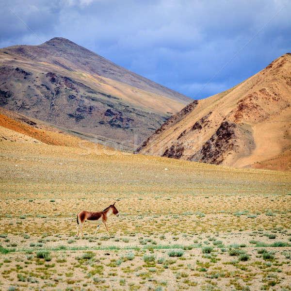 Sauvage ass plateau ciel herbe nature Photo stock © alexeys