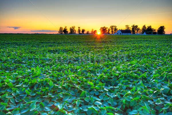 Vidék naplemente gyönyörű farm központi Indiana Stock fotó © alexeys