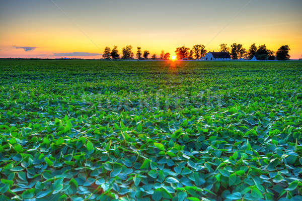 Country sunset Stock photo © alexeys
