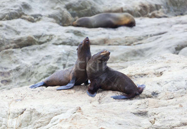 Stock photo: Sea Lion's life
