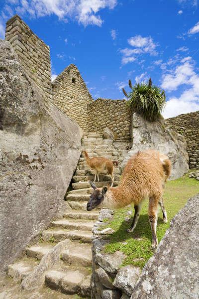 Machu Picchu lopen oude ruines gras veld Stockfoto © alexeys