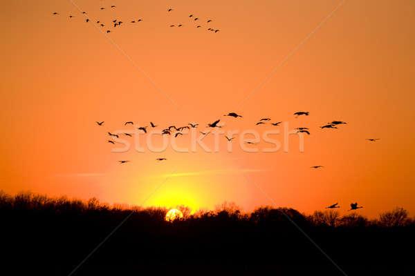 Vándorlás sziluettek repülés égbolt nap naplemente Stock fotó © alexeys