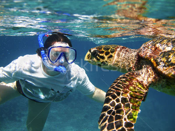 Stockfoto: Sluiten · zee · schildpad · vrouw · Blauw · masker