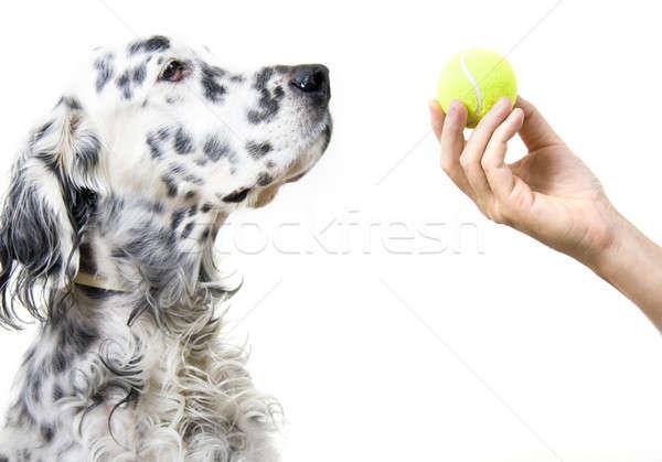 Playing with dog Stock photo © alexeys