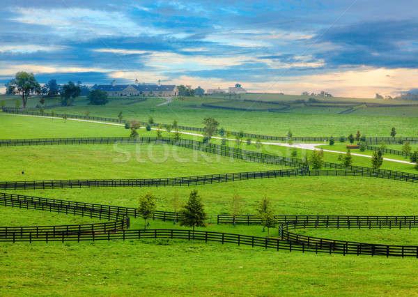 Horse country Stock photo © alexeys