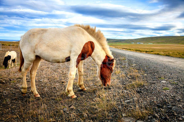 Pony remote strada sterrata Islanda nubi strada Foto d'archivio © alexeys