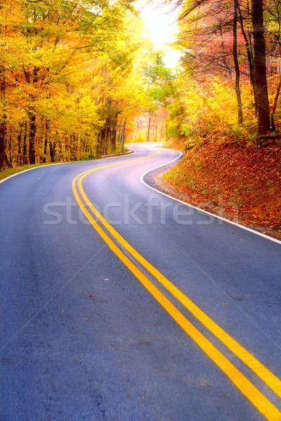 Winding road Stock photo © alexeys