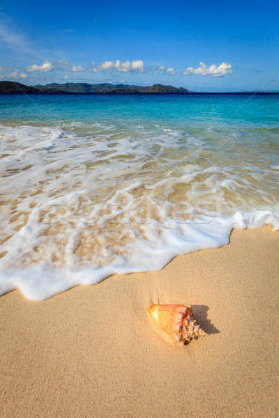 Pristine beach in British Virgin Islands Stock photo © alexeys