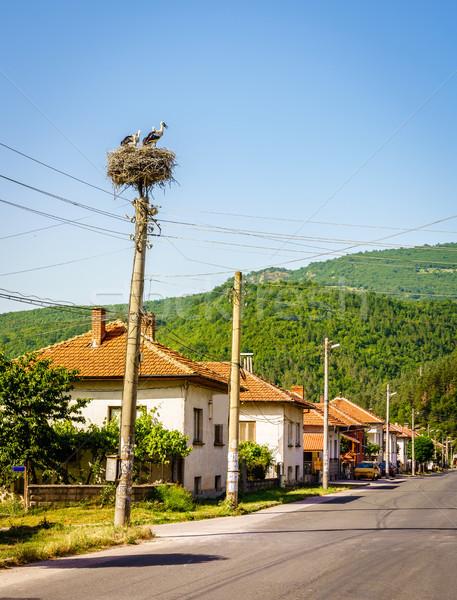 Stork nest in a Bulgarian village Stock photo © alexeys