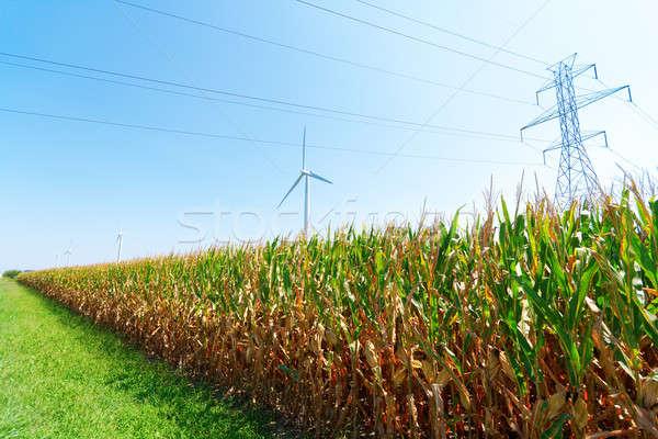 Szélfarm szélturbinák farm kék technológia kukorica Stock fotó © alexeys