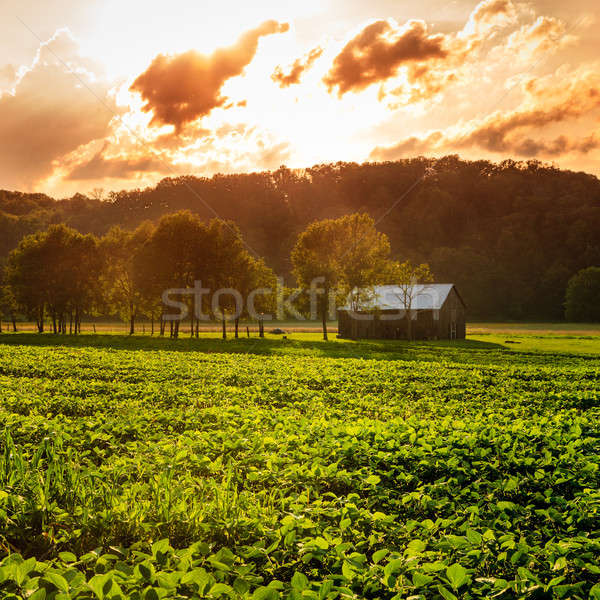 Rural scene Stock photo © alexeys