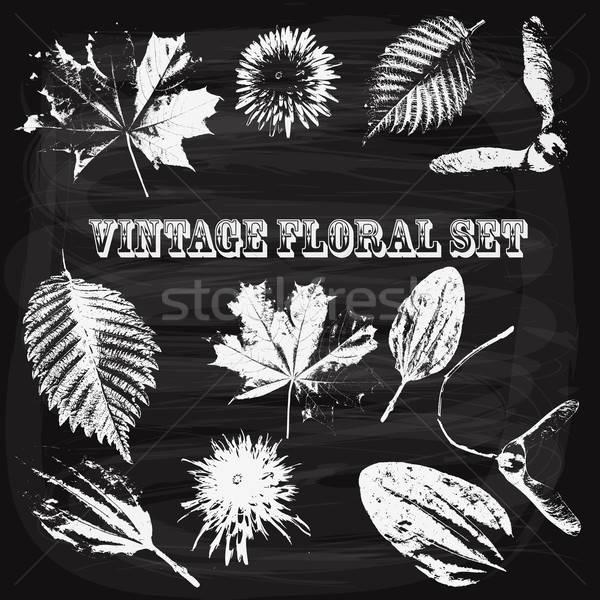 Vector Vintage Style Floral Elements on Blackboard Stock photo © alexmakarova