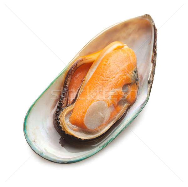 Green mussel Stock photo © Alexstar