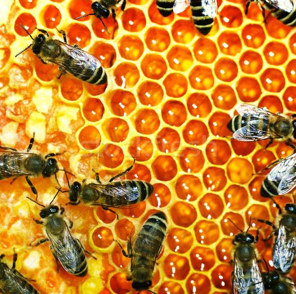 Dolgozik méhek közelkép kilátás háttér minta Stock fotó © Alexstar