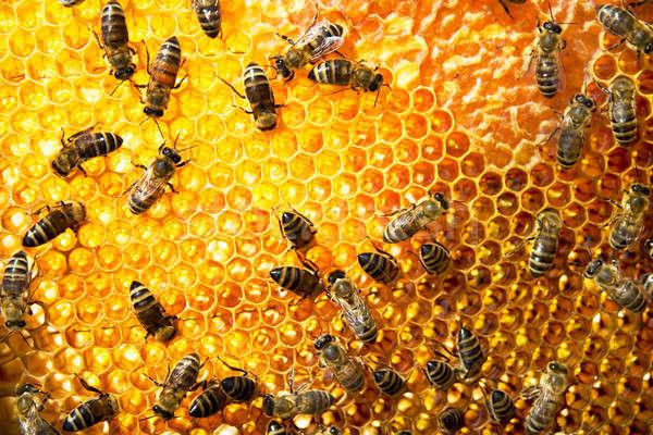 En nid d'abeille travail sweet macro occupés Photo stock © Alexstar