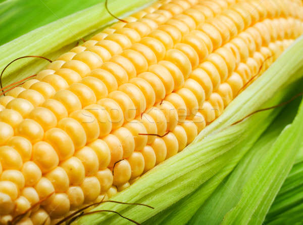 corn cob Stock photo © Alexstar