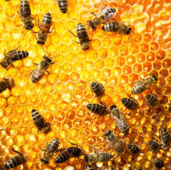 A nido d'ape lavoro dolce macro occupato primo piano Foto d'archivio © Alexstar