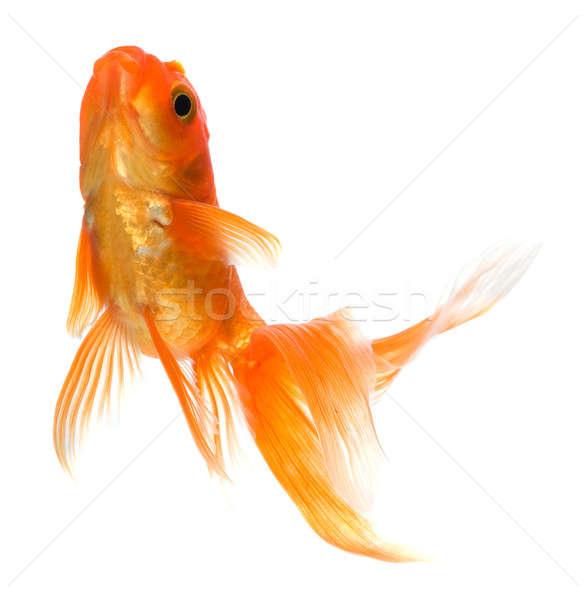 Arany hal aranyhal fehér üveg vízalatti Stock fotó © Alexstar