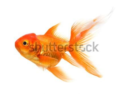 Goud vis goudvis witte glas onderwater Stockfoto © Alexstar