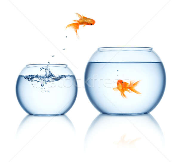 Goldfish sautant sur eau verre Photo stock © Alexstar