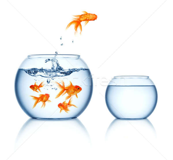 Sautant Goldfish sur eau verre Photo stock © Alexstar