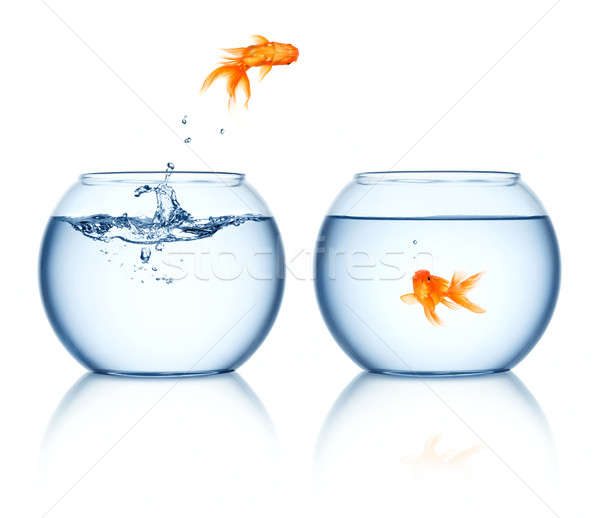 Photo stock: Sautant · Goldfish · sur · eau · verre